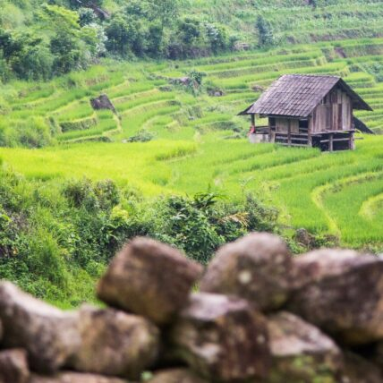 Fertile green rice fields of Sapa on a sunny day