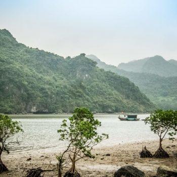 Mangrove - Cat Ba - Lan Ha Bay