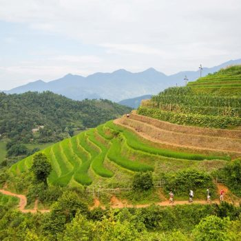 Beautiful rice plateaus in Sapa mountains